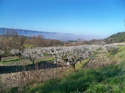Domaine Saint Amant - Dans les Dentelles de Montmirail, entre 400 et 600 m d'altitude, le viognier s'épanouit à merveille.