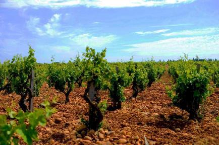 Domaine Tour Saint Michel - Vins de Châteauneuf-du-Pape et Côtes du Rhône - Domaine familial depuis 4 générations