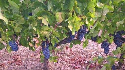 Domaine Valambelle - Venez découvrir nos vins bio du Languedoc !