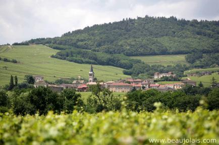 Domaine Vincent Geoffroy - Venez découvrir nos vins en Beaujolais !