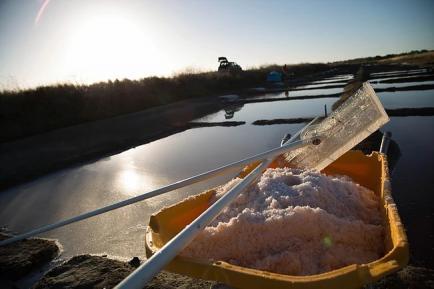 Eloi le Saunier - Fleur de sel de l'Ile de ré aromatisée aux plantes sauvages, et autres produits locaux.