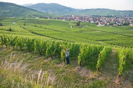 Vins d'Alsace Etienne SIMONIS - Vins d'Alsace en Biodynamie depuis 19 ans