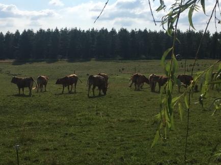 Ferme Fromagère Ries - Fromages fermiers de vache, chèvre et brebis