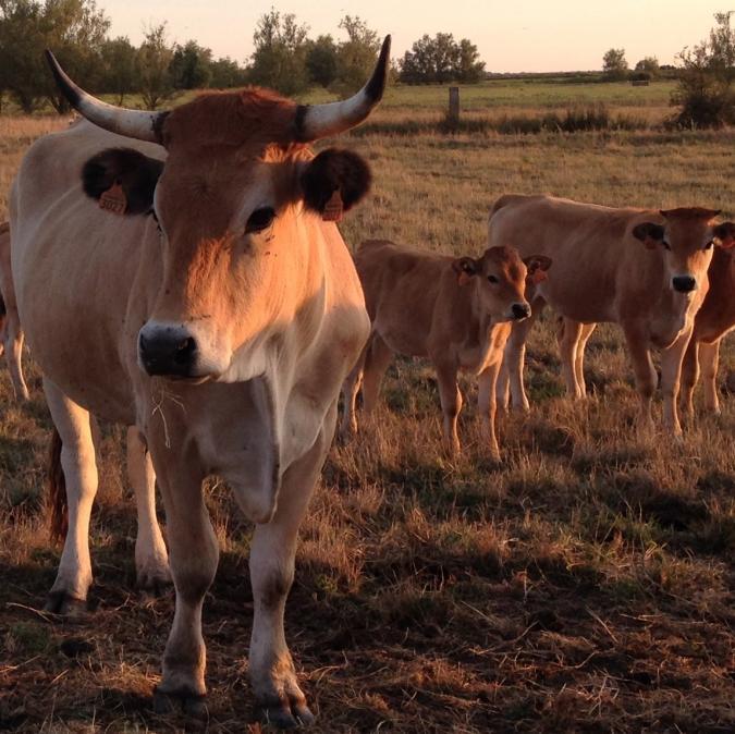 La Ferme de Dixmérie - Veau bio - Colis de veau