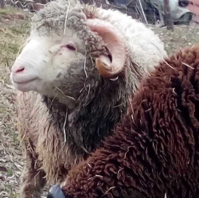 Ferme la Bouïsse - Agneau - Agneau et mouton