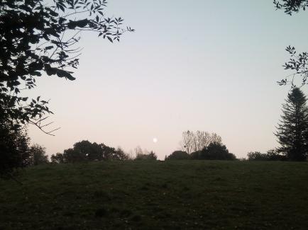 La Ferme de Grémi - Nous elevons du Porc de Bayeux en Plein Air.C'est une race menace et locale