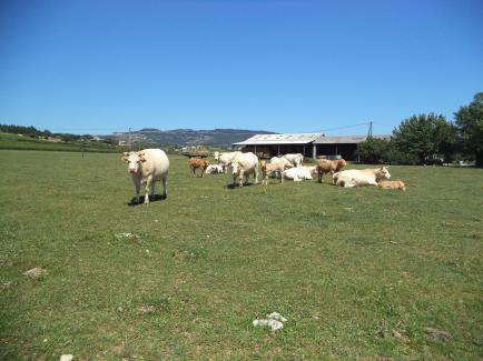 La ferme des bombyx - Vente direct de viande bio bovin et caprin