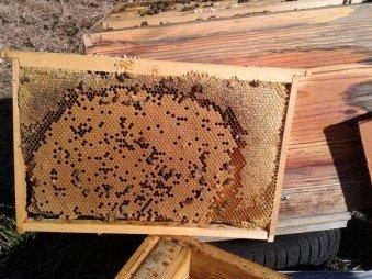 La Maison des Abeilles - Acacia, bourdaine, fleurs, montagne, Nougat, Pain d'épices, Hydromel, bonbons au miel & prolis
