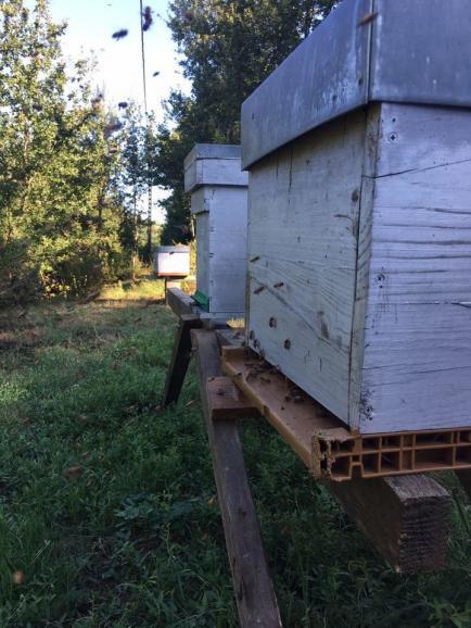 La papillonne - Producteur de miels et ses dérivés