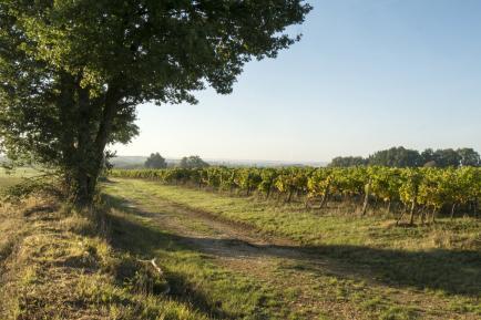 Le Clos Du Breil - Venez découvrir nos vins Côtes de Bergerac !