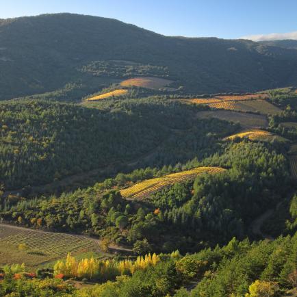 Le Clos du Marbrier - Petit domaine en bio créé par une vigneronne première génération