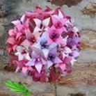 Le papier d'Emma est là - Je propose à la vente des objets de déco et des bijoux en papier plié (origami) et/ou collé