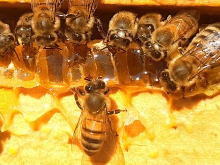 Les Ruchers de Wendy - la production dans le respect des abeilles et de leurs besoins