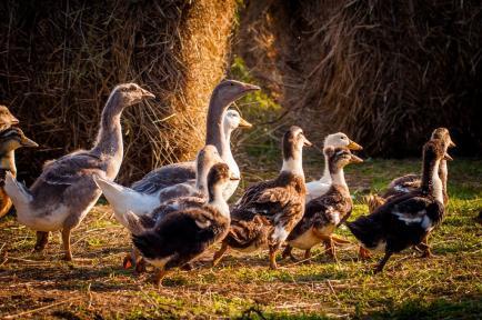 Maison Lepetit - Foies gras et spécialités du Sud-Ouest alliant qualité tradition et authenticité