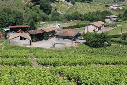 Domaine des Trois Cerisiers - Venez découvrir d'une vigneronne indépendante d'un domaine familiale de 6 hectares à Quincié