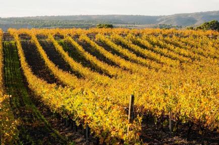 Mas Cremat - Venez découvrir nos vins Côtes du Roussillon !