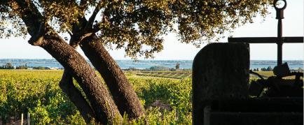 Michel Gassier - Je façonne des vins qui expriment les nuances de leur terroir et la sincérité de leur créateur.