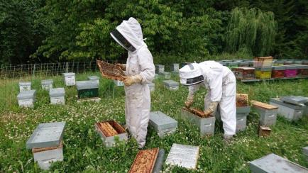 Miel de Champagne Ardenne - Nous proposons différents miels ainsi que gelée royale, pâtisseries et confiseries à base de miel.