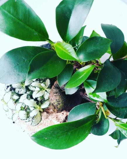 My vegetal - Conception de terrariums paysagés