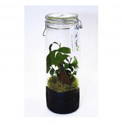 My vegetal - Terrarium lumineux IPOH - terrarium