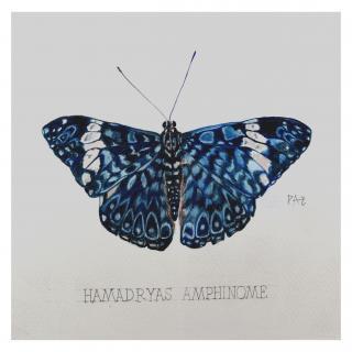 Paquito Paz - Amphinome - Aquarelle