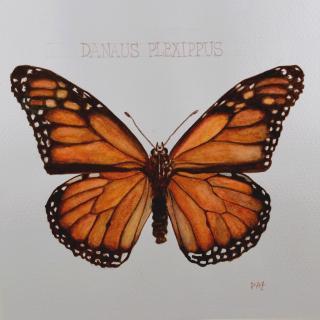 Paquito Paz - Monarque - Aquarelle