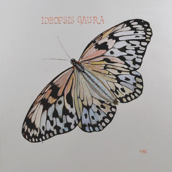 Paquito Paz - Nymphette d'Indonésie - Aquarelle
