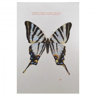 Paquito Paz - Papillon flambé - Aquarelle