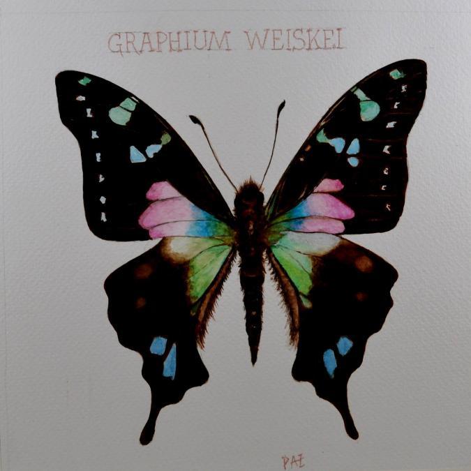 Paquito Paz - Porte-queue - Aquarelle