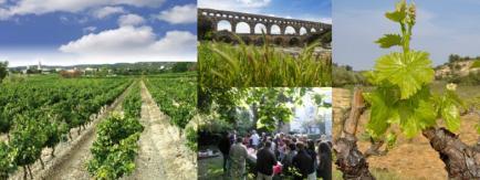 Domaine des Romarins - Xavier et Benoît Fabre, 4ème génération de vignerons sur le domaine
