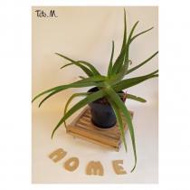 Tito. M - Support plante grisé sur roulettes transparentes, corde de jute - Support porte-plante