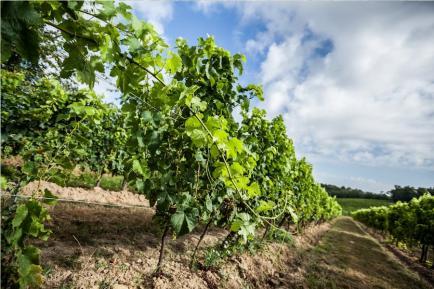 Vignobles Lacoste - Venez découvrir nos vins de Bordeaux !