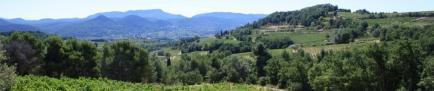 VILLA SAFRANIER - Venez découvrir nos vins de Bourgogne !