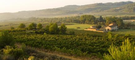 Viranel - Bienvenue au coeur du Languedoc, sur le terroir de Saint-Chinian !